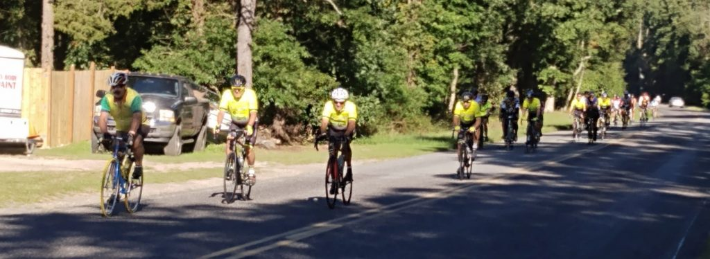 about 20 bicycles riding down a wooded road
